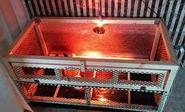 Обогрев цыплят в брудере, что выбрать лампу или ик пленку